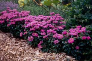 Best Flowers for Full Sun Perennial