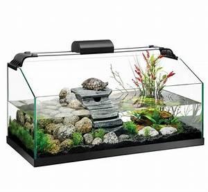 Tiere Für Aquarium : aquarium einrichtung sorgt f r das wohlf hlen der ~ Lizthompson.info Haus und Dekorationen