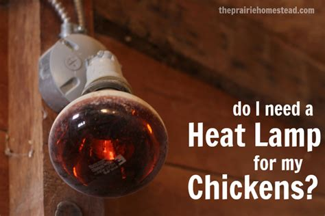 heat l for ducklings do my chickens need a heat l the prairie homestead