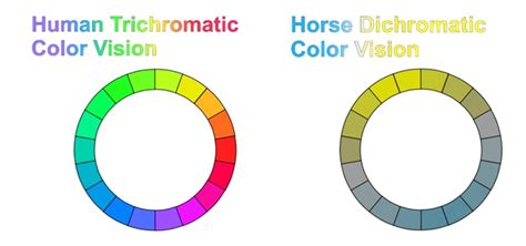 are horses color blind photopigment basis for dichromatic color vision in the