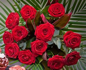Red Roses flower beautiful red rose wallpaper - Angelic Hugs