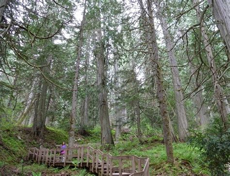 Types Of Forests In The World And Their Attractions And