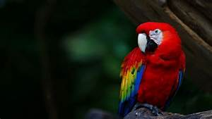 Colorful Parrots HD Wallpapers