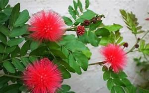 Arbuste Plein Soleil Longue Floraison : fleurs grimpantes plein soleil ~ Premium-room.com Idées de Décoration