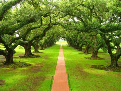 Beautiful Trees Hd Wallpapers 1080p