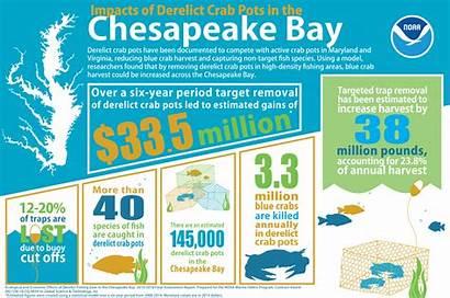Bay Chesapeake Fishing Infographic Infographics Impact Regional