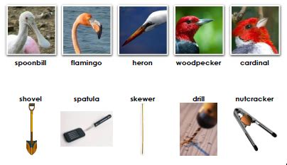 montessori zoology beaks  tools  images animal