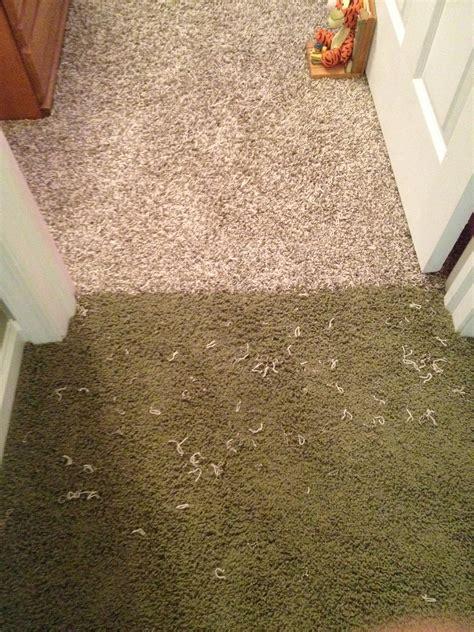 Carpet To Tile Transition Bunnings by Carpet To Transition Carpet Vidalondon