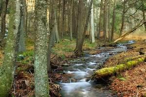 Baum Am Wasser : kostenlose bild wasser baum landschaft moos fluss ~ A.2002-acura-tl-radio.info Haus und Dekorationen