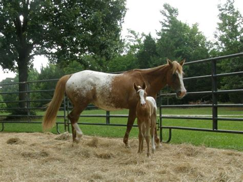 texas horse industry incentive programs gets
