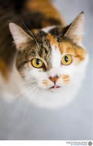 petsmart cats 301 moved permanently