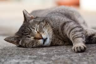 cat purring cat purr your friend s noise free