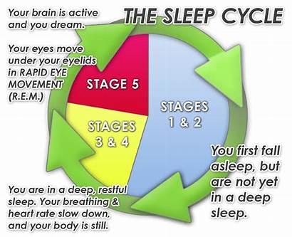 Sleep Cycle Wake Cycles Better Feeling Rem