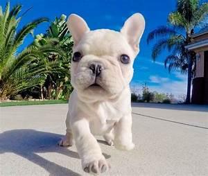 101 best Animal Wallpaper images on Pinterest | Animal ...