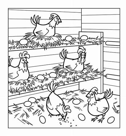 Chicken Coloring Chickens Pages Hens Chicks Coop