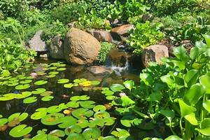 Ecosystem Ponds And Water Features In Des Moines