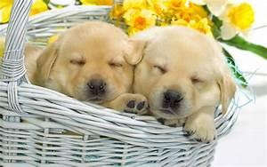 2 Sweet Puppies Sleeping HD desktop wallpaper : Widescreen ...