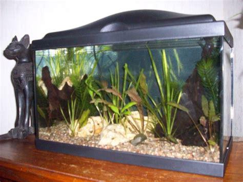 quelle poisson mettre dans mon aquarium remi74