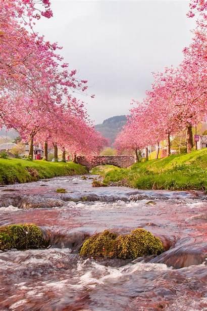 Sakura River Bridge Flow Background Iphone Landscape