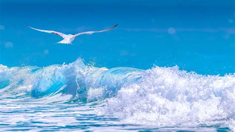 arctic tern wallpapers backgrounds