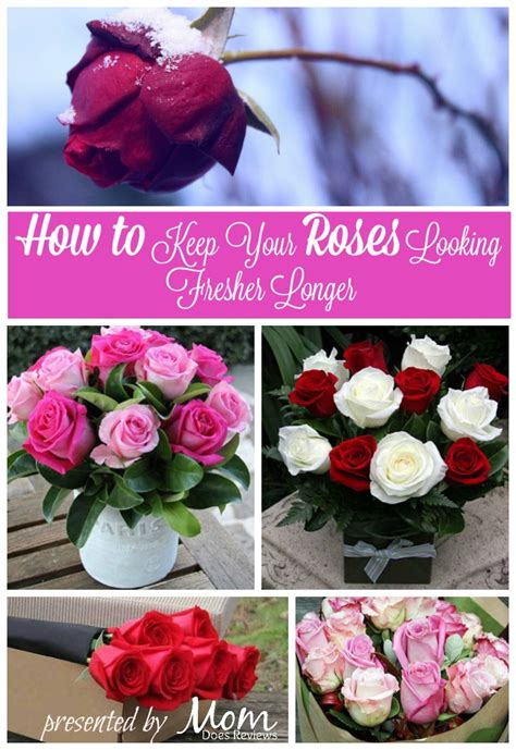 How To Revive Roses In A Vase - can you revive a wilted you won t believe how easy