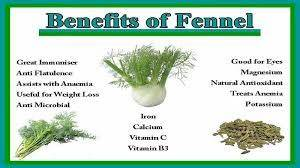 सौंफ के फायदे एवं उपयोग | Benefits and Use of Fennel seeds ...