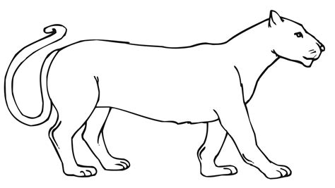 Mountain Lion Coloring Pages Getcoloringpagescom