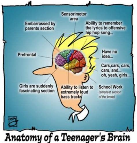 teenage brain