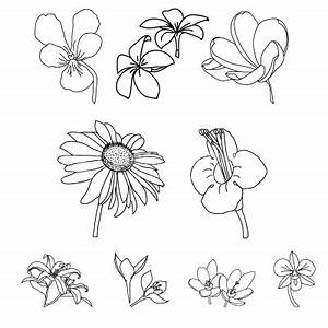 Drawings of Different Types of Flowers images