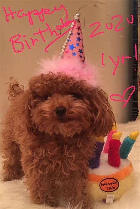 musical birthday cake plush dog toy baxterboo