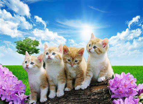 Free Animal Wallpaper For - unique www animal wallpaper free anime wallpapers