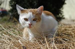 stalking cat by annale-a on DeviantArt