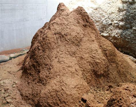 Termiten Im Haus Termiten Essen Holz Stockfoto Bild