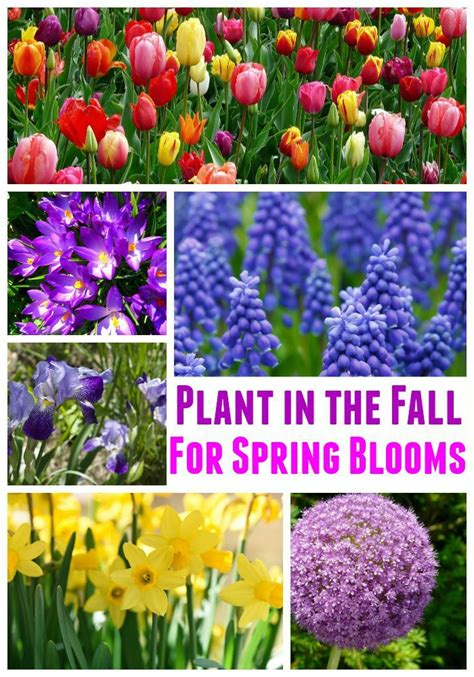 25 best ideas about fall planting on planting