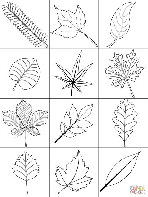 Coloring Leaves by Autumn Leaves Coloring Page Free Printable Coloring Pages