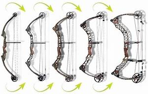 Wiring Diagram Database  How To String A Compound Bow Diagram