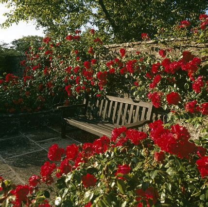 garden seat surrounded  red roses   walled rose