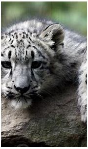 White Tiger Cubs Wallpapers - Wallpaper Cave