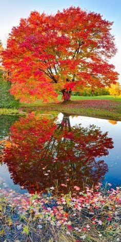 1000 ideas about fall trees on trees idaho and canadian prairies