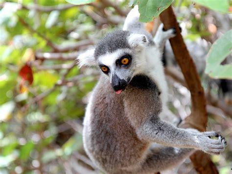 Exotic Animals On Richard Branson's Island - Business Insider