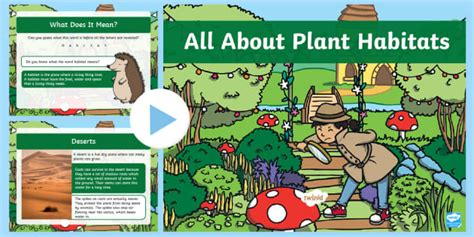 * New * Ks1 All About Plant Habitats Powerpoint