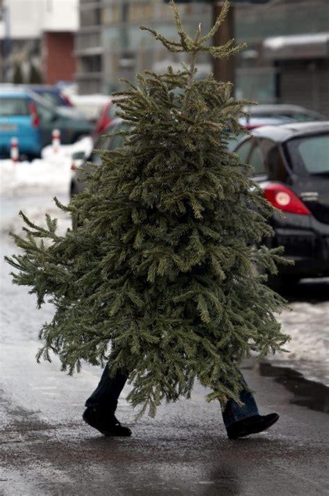 walking christmas tree christmas pinterest