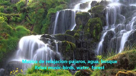 musica de relajacion pajaros agua bosque relax