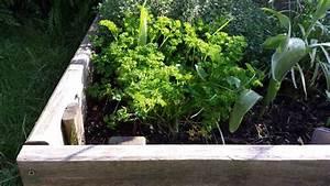 Semis De Persil : comment et quand semer planter du persil ~ Dallasstarsshop.com Idées de Décoration