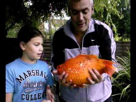 le plus gros poisson du monde