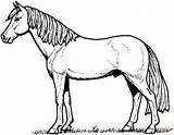 Coloring Horse Pages Stallion Supercoloring Printable sketch template