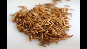 How To Cook Mealworms  Eating Mealworms  Cook Mealworms
