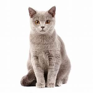 Weißer Wurm Katze : fotos katze tiere starren wei er hintergrund ~ Markanthonyermac.com Haus und Dekorationen