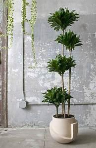 Jardiniere Interieur : la grande jardini re comment la choisir pour en tirer le ~ Melissatoandfro.com Idées de Décoration