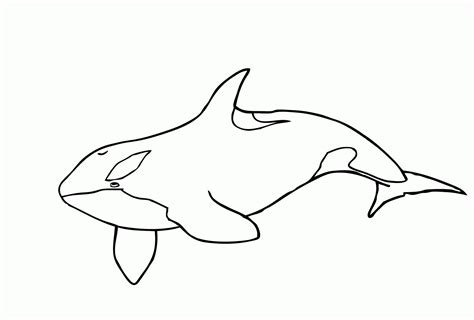 Coloring Whale by Killer Whale Coloring Pages Avaboard